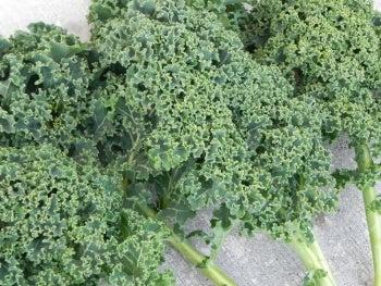 Winterbor Kale